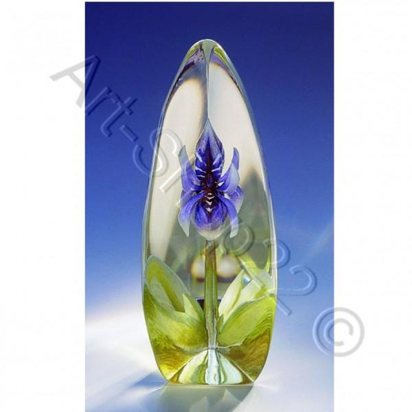 Lilie lila